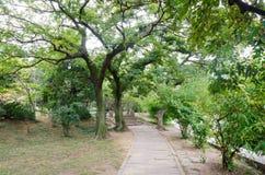 Parco degli alberi in primavera Fotografia Stock