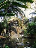 Parco degli uccelli e dei rettili in Bali, pellicani in Bali Fotografie Stock