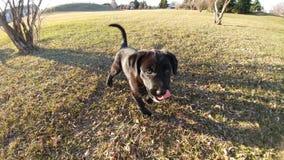 Parco dei cuccioli Fotografia Stock Libera da Diritti