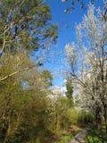 Parco del boschetto dell'olmo in Spring8 Fotografia Stock