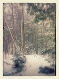 Parco del burrone della cicuta - inverno Fotografia Stock Libera da Diritti