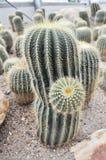 Parco del cactus fotografie stock libere da diritti