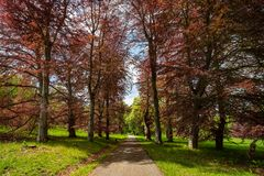 Parco del castello a primavera, Benesov, repubblica Ceca di Konopiste fotografia stock