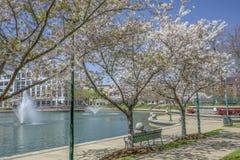 Parco del centro urbano in primavera fotografia stock libera da diritti