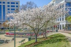 Parco del centro urbano in primavera fotografia stock