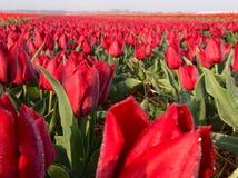 Parco del fiore Fotografia Stock