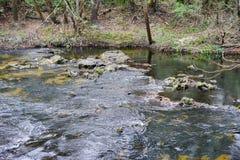 Parco del fiume di Hillsborough Fotografia Stock