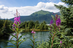 Parco del ghiacciaio di Mendenhall, Juneau, Alaska Immagine Stock