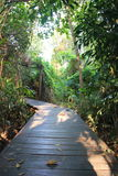 Parco del giardino Fotografia Stock
