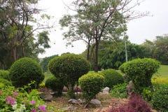Parco del giardino Immagini Stock