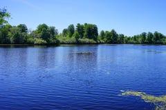 Parco del lago lettuce, Fotografia Stock Libera da Diritti