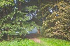 Parco del paesaggio nella mattina nebbiosa Fotografie Stock