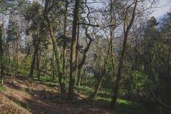 Parco del palazzo di Pena in Sintra, Portogallo Foresta pluviale con le felci selvagge immagine stock