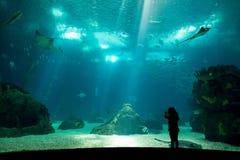 Parco dell'acqua Fotografie Stock
