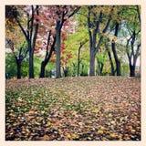 Parco dell'albero del fogliame di caduta Fotografia Stock Libera da Diritti