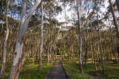 Parco dell'eucalyptus Immagini Stock Libere da Diritti