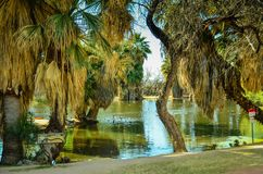 Parco dell'oasi di Tucson, Arizona Fotografie Stock