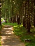 Parco della betulla in Lituania immagini stock libere da diritti