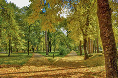 Parco della città in autunno Fotografia Stock Libera da Diritti
