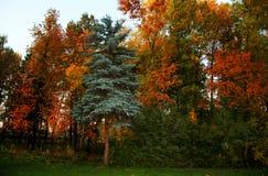 parco della città con differenti alberi di tutti i colori dell'autunno Immagini Stock