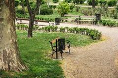 Parco della città con i banchi e l'albero del sicomoro Immagine Stock Libera da Diritti