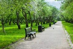 Parco della città con il sentiero per pedoni, i banchi e sbocciare della mela o Immagine Stock Libera da Diritti