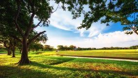 Parco della città con prato inglese verde ed alcuni alberi Immagine Stock
