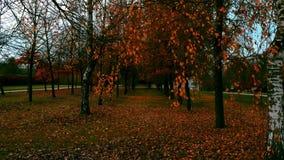Parco della città di autunno video d archivio
