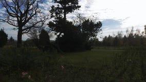 Parco della città di autunno archivi video
