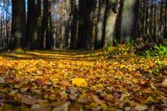 Parco della città di autunno Fotografie Stock Libere da Diritti