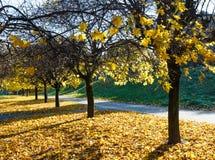 Parco della città di autunno Immagini Stock