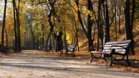 Parco della città di autunno con i banchi Percorso con i fogli caduti Fondo archivi video