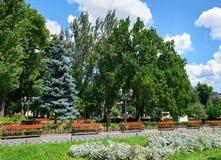 Parco della città di estate al mezzogiorno, al giorno soleggiato luminoso, agli alberi con le ombre ed all'erba verde Fotografie Stock