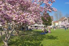 Parco della città in Ettlingen Immagine Stock Libera da Diritti