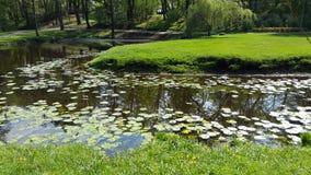 Parco della città nell'ambito di luce soleggiata Fotografia Stock