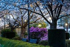 Parco della città nella sera di primavera Fotografia Stock