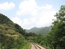 Parco della ferrovia con l'albero Fotografie Stock
