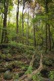 Parco della montagna di Rocky Lush Green Great Smoky fotografia stock libera da diritti
