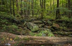 Parco della montagna di Rocky Lush Green Great Smoky immagini stock