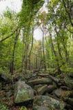 Parco della montagna di Rocky Lush Green Great Smoky fotografie stock libere da diritti