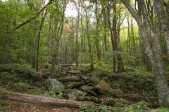 Parco della montagna di Rocky Lush Green Great Smoky immagine stock libera da diritti