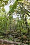 Parco della montagna di Rocky Lush Green Great Smoky immagini stock libere da diritti