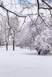 Parco della neve fotografie stock libere da diritti