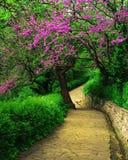 Parco della primavera Fotografia Stock