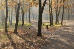 Parco della quercia in autunno fotografia stock