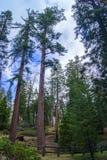 Parco della sequoia, California fotografie stock libere da diritti