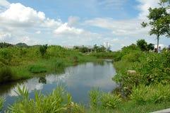 Parco della zona umida Fotografie Stock