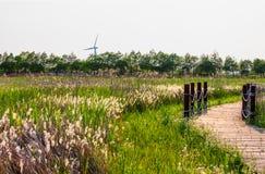 Parco della zona umida di Dongtan all'isola di Chongming immagine stock