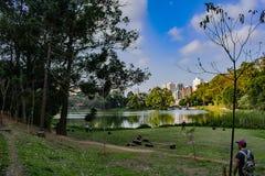 Parco di acclimatazione nella scimmia del landsc di Sao Paulo Brasile in cielo blu dentro tardi fotografie stock libere da diritti
