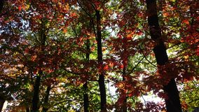 Parco di Autumn Red Trees In The stock footage